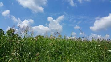 Lexington Public Library_Shaker Hill hike_june 2016_5