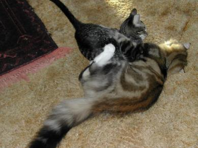 annie and olive tussling