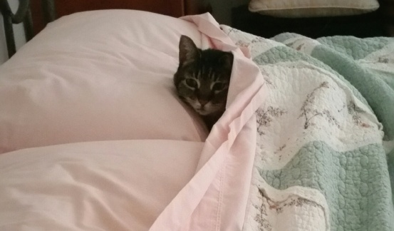 annie under covers