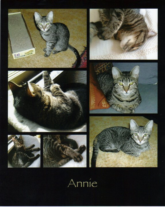 annie_2010 collage