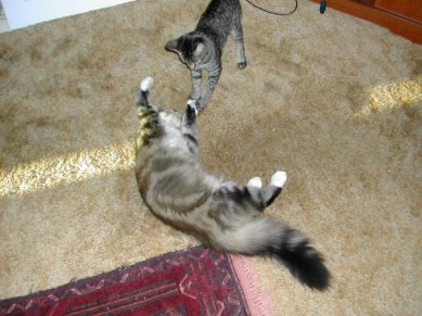 olive and annie_both just kittens and about the same age